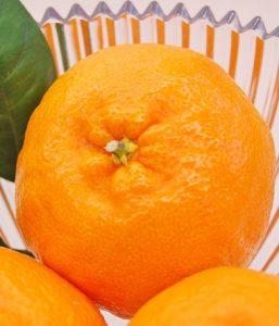 【浜松実店舗】デコポンの妹!『はるみ』ご試食&セール!